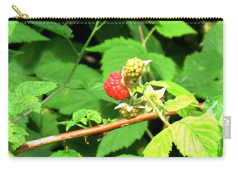 Rasberry Carry-all Pouch featuring the photograph The Rasberry Patch by Ian MacDonald
