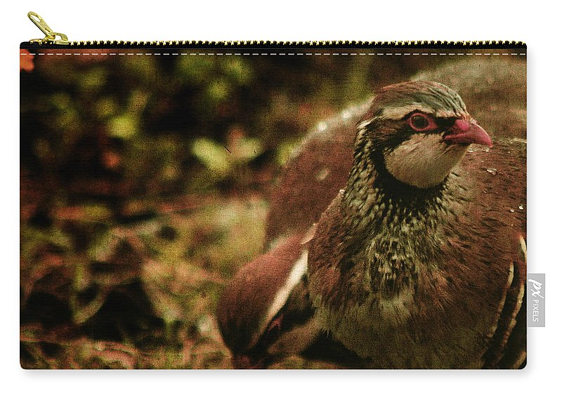 Partridge Carry-all Pouch featuring the photograph The Redlegged Partridges by Angel Ciesniarska