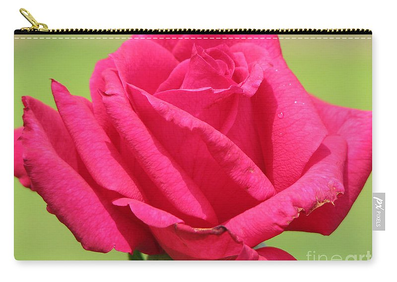 Roses Carry-all Pouch featuring the photograph The Rose by Amanda Barcon
