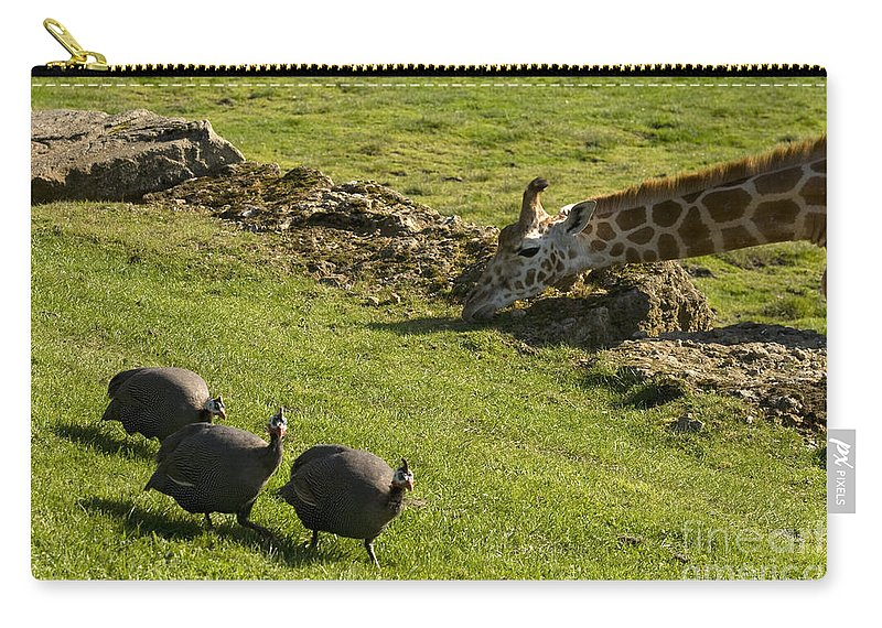 Helmeted Guineafowl Carry-all Pouch featuring the photograph the Safari park by Angel Tarantella