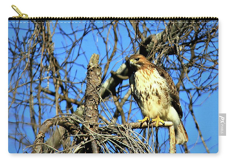 The Search Carry-all Pouch featuring the photograph The Search Red Tail Hawk Art by Reid Callaway