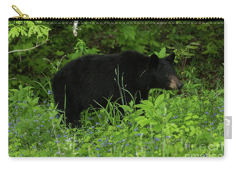 Bear Carry-all Pouch featuring the photograph The Standoff by Jo Ann Gregg
