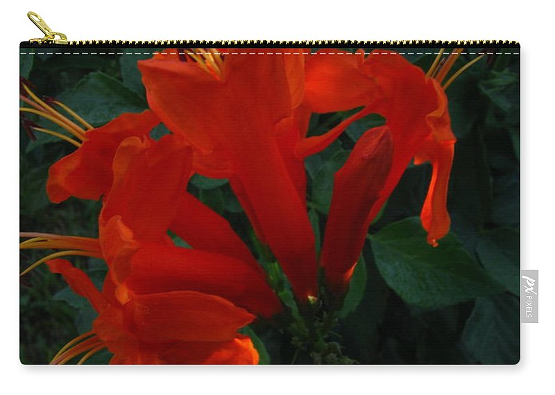Patzer Carry-all Pouch featuring the photograph The Star by Greg Patzer