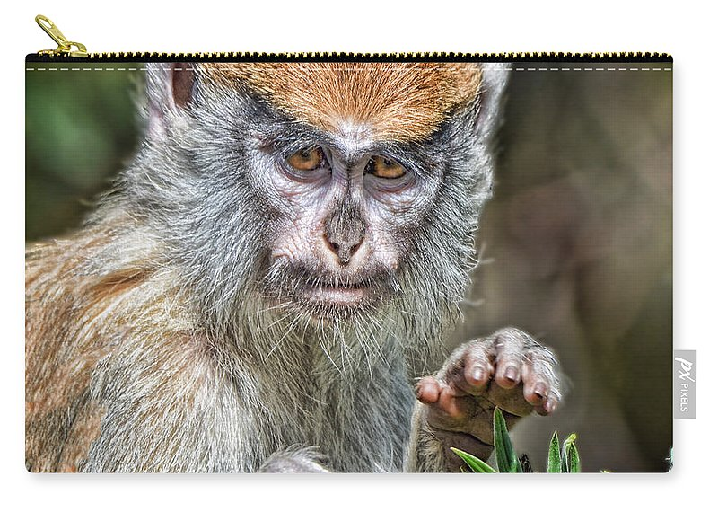 Patas Monkey Carry-all Pouch featuring the photograph The Stare A Baby Patas Monkey by Jim Fitzpatrick