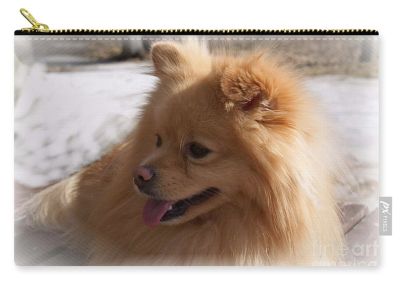 Pomeranian Dog Carry-all Pouch featuring the photograph The Sun On My Back by Joanne Smoley