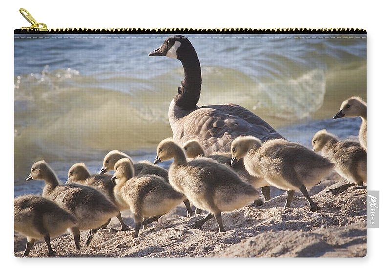 Canada Geese Carry-all Pouch featuring the photograph The Swimming Lesson by Albert Seger