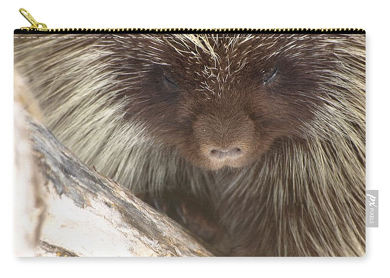 Porcupine Carry-all Pouch featuring the photograph The Tender Side Of Porcupine by DeeLon Merritt