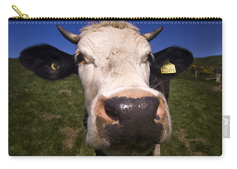 Cow Carry-all Pouch featuring the photograph The Wideangled Cow by Angel Ciesniarska