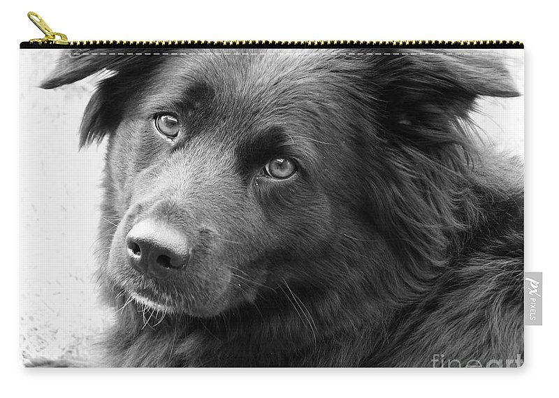 Dog Carry-all Pouch featuring the photograph Thinking by Amanda Barcon