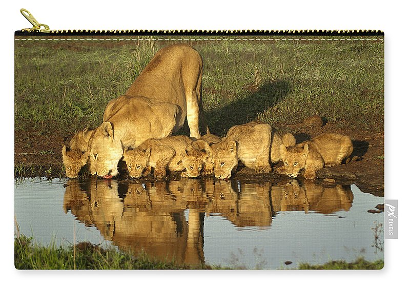 Lion Carry-all Pouch featuring the photograph Thirsty Lions by Michele Burgess