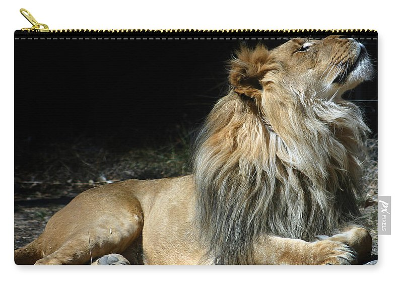 Lion Carry-all Pouch featuring the photograph This Is My Best Side by Anthony Jones