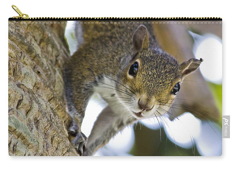 Squirrel Carry-all Pouch featuring the photograph This Is My Tree by Roger Wedegis