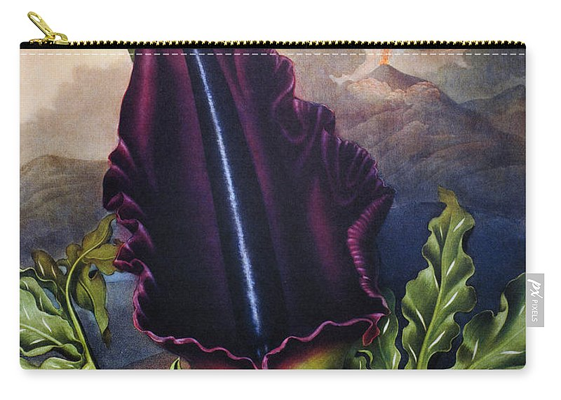 1801 Carry-all Pouch featuring the photograph Thornton: Dragon Arum by Granger