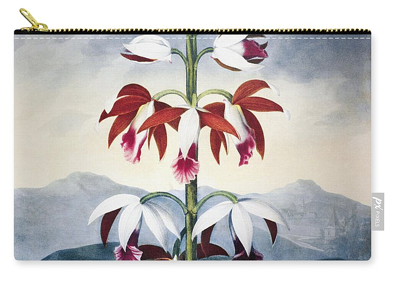 1802 Carry-all Pouch featuring the photograph Thornton: Limodoron by Granger