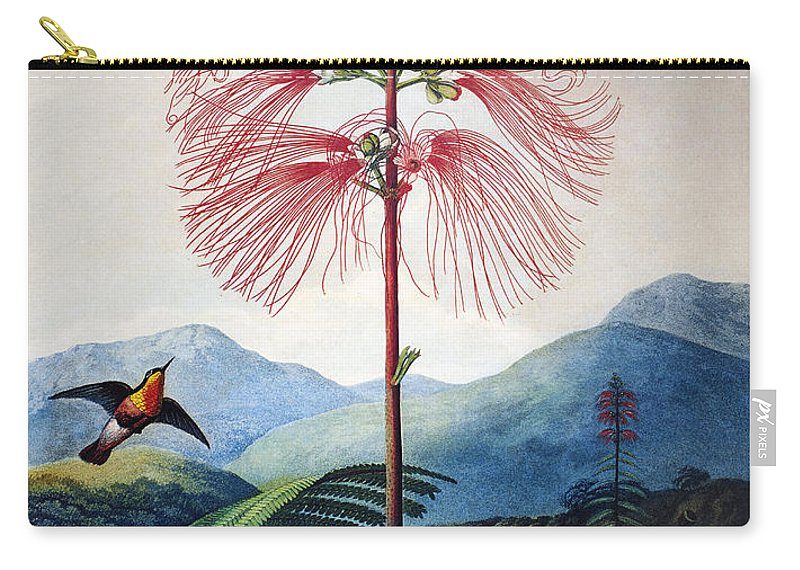 1799 Carry-all Pouch featuring the photograph Thornton: Sensitive Plant by Granger