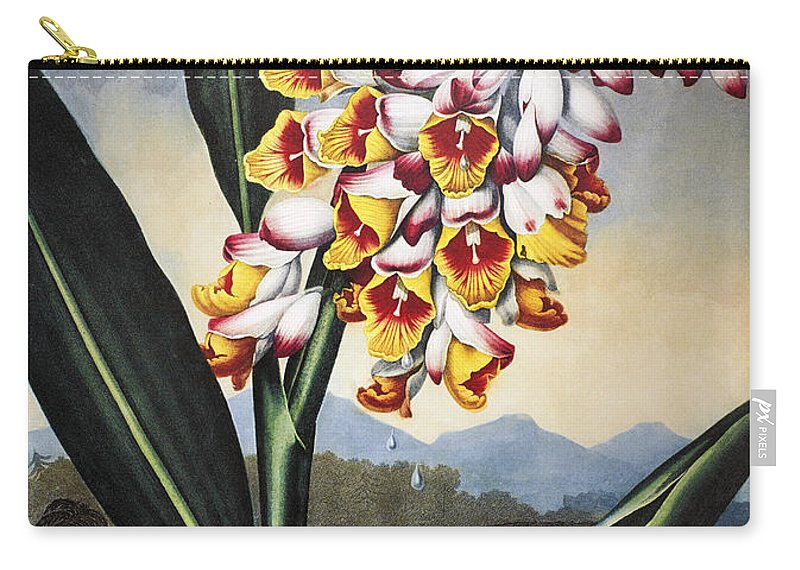 1801 Carry-all Pouch featuring the photograph Thornton: Shell Ginger by Granger