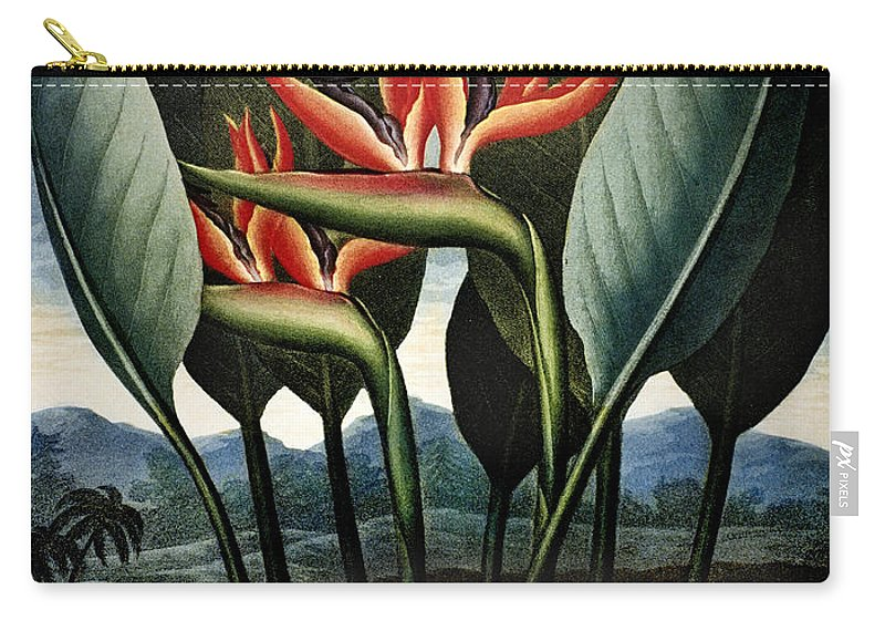 1804 Carry-all Pouch featuring the photograph Thornton: Strelitzia by Granger