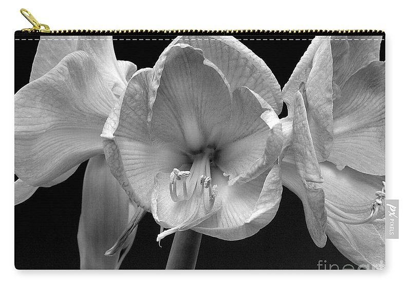 Amaryllis Carry-all Pouch featuring the photograph Three Amaryllis Black And White Print by James BO Insogna