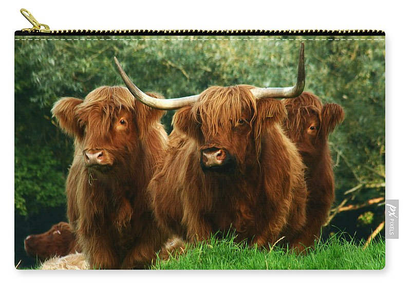 Cow Carry-all Pouch featuring the photograph Three Amigos by Angel Ciesniarska