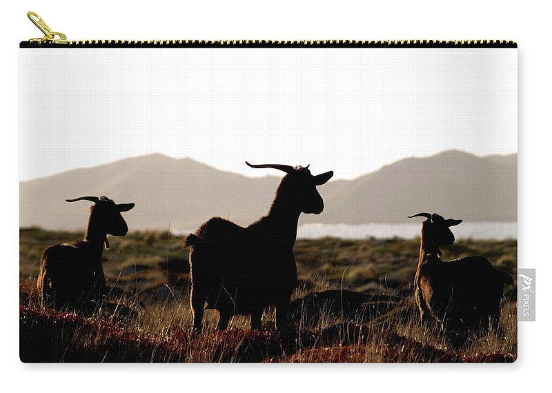 Goat Carry-all Pouch featuring the photograph Three Goats by Pedro Cardona Llambias