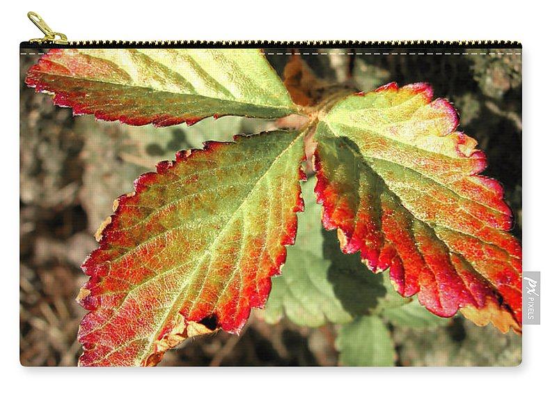 Forest Carry-all Pouch featuring the photograph Three Leaves by Todd Blanchard