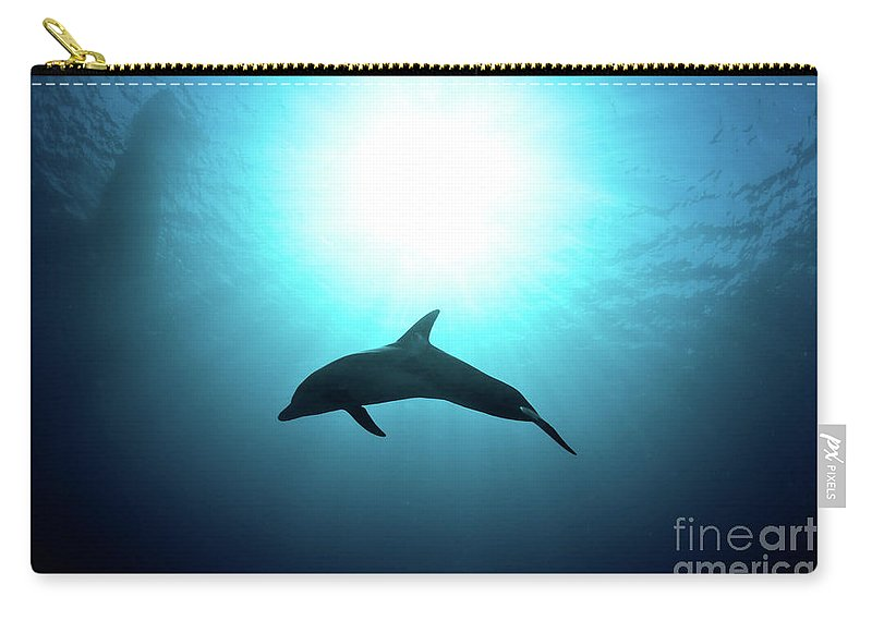 Dolphin Carry-all Pouch featuring the photograph three year old Dolphin by Hagai Nativ