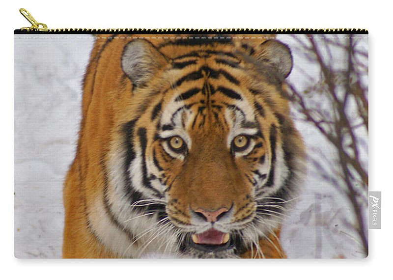 Tiger Carry-all Pouch featuring the photograph Tiger by Heather Coen