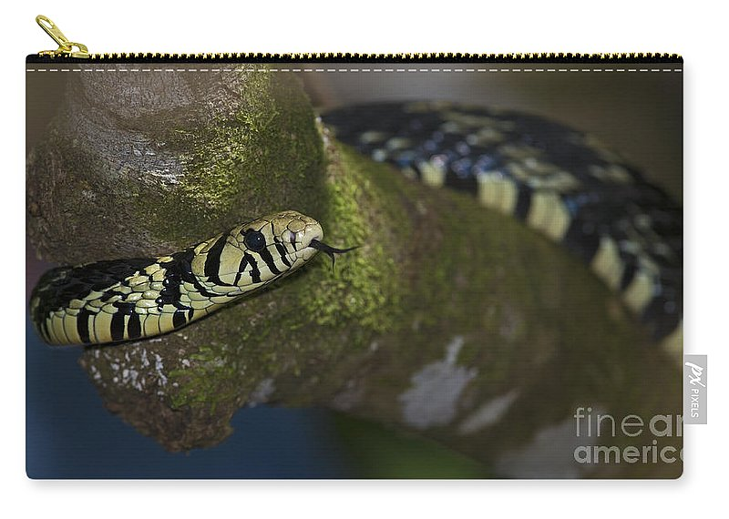 Festblues Carry-all Pouch featuring the photograph Tiger In The Tree.. by Nina Stavlund