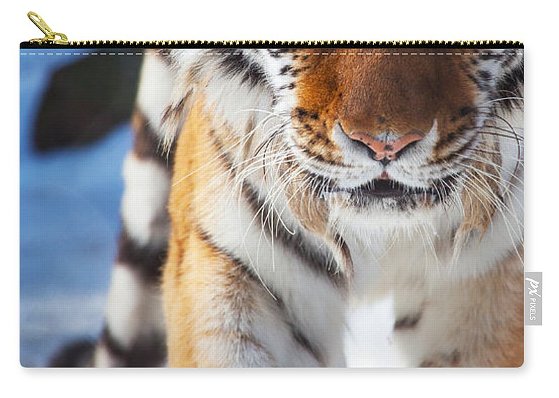 Tiger Strut Carry-all Pouch featuring the photograph Tiger Strut by Karol Livote