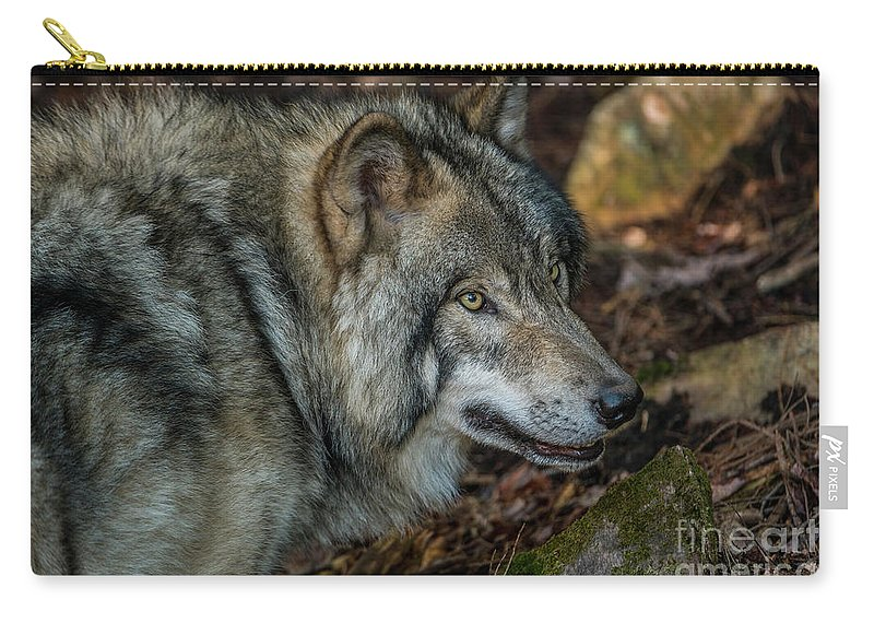 Timber Wolf Carry-all Pouch featuring the photograph Timber Wolf Picture - Tw417 by Wolves Only