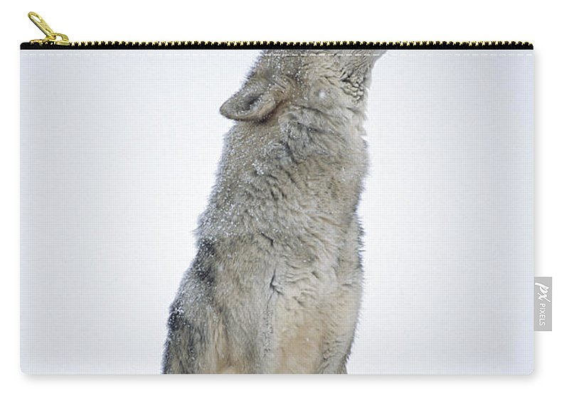 00174271 Carry-all Pouch featuring the photograph Timber Wolf Portrait Howling In Snow by Tim Fitzharris