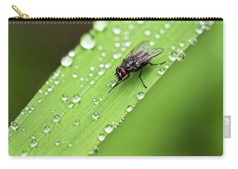 Fly Carry-all Pouch featuring the photograph Time For A Wash by Susie Peek