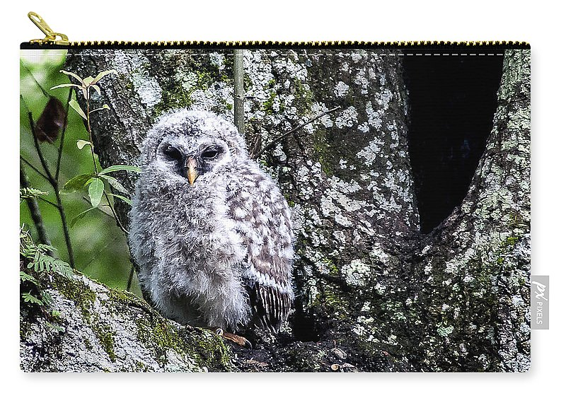 Barred Owl Carry-all Pouch featuring the photograph Time To Leave by Norman Johnson