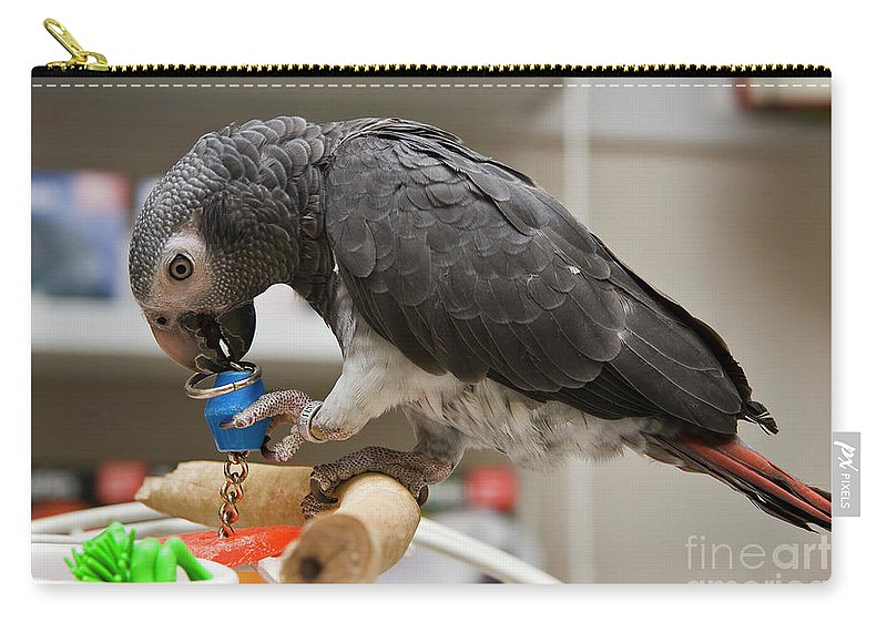 Timneh African Grey Parrots