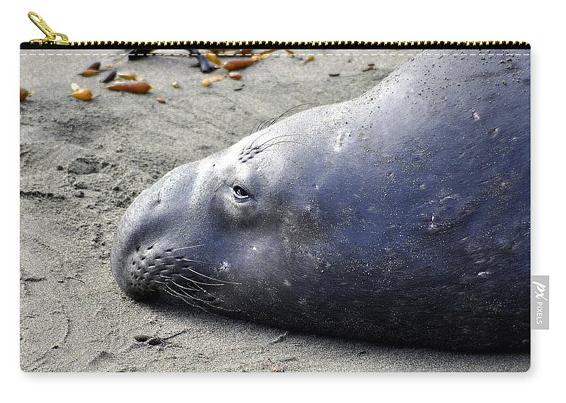 Seal Carry-all Pouch featuring the photograph Tired Seal by Shannon Nickerson