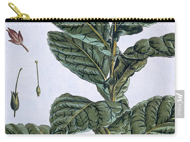 Tobacco Plant Carry-all Pouch featuring the drawing Tobacco Plant by Pierre-Joseph Buchoz