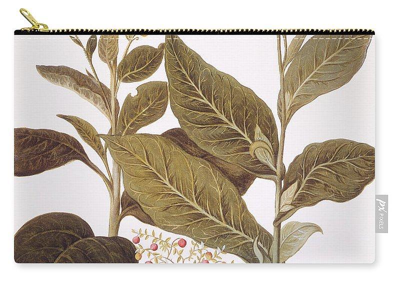 1613 Carry-all Pouch featuring the photograph Tobacco Rustica, 1613 by Granger