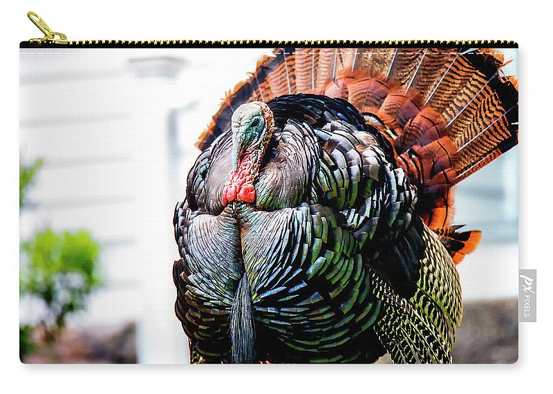 Tom Carry-all Pouch featuring the photograph Male Turkey by Grant Dupill