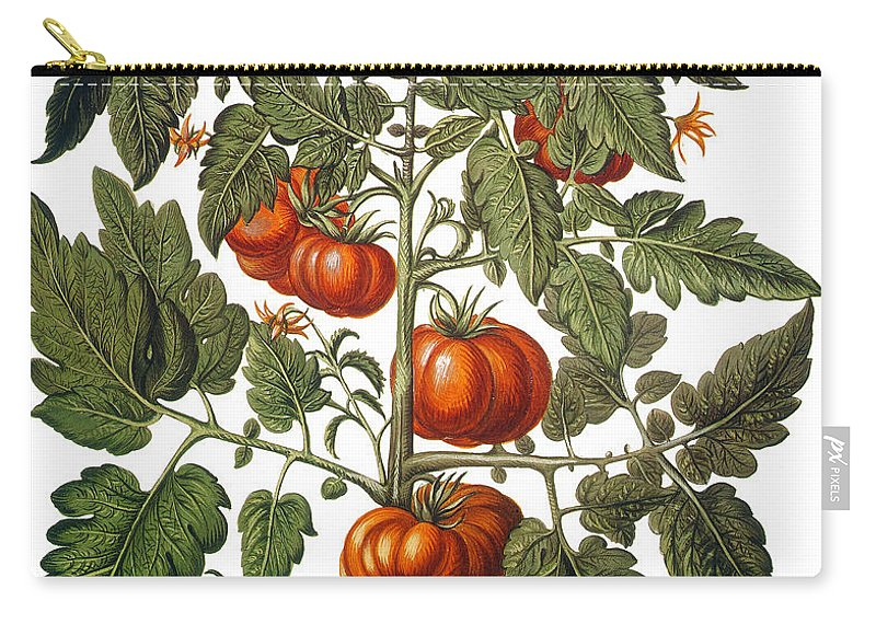 1613 Carry-all Pouch featuring the photograph Tomato & Watermelon 1613 by Granger
