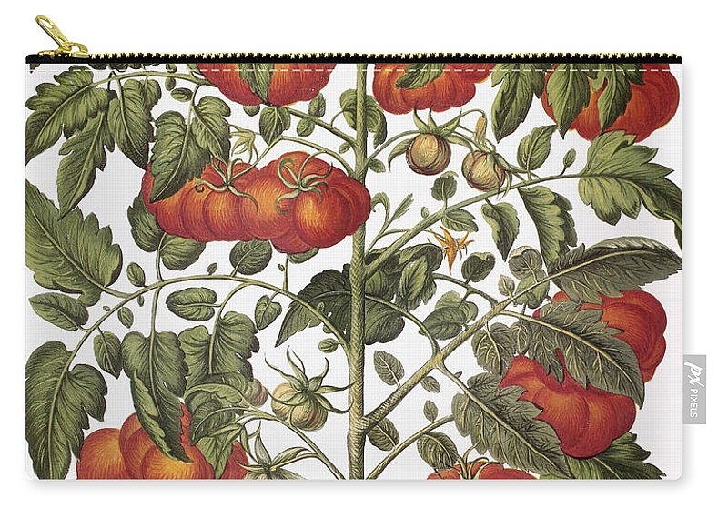 1613 Carry-all Pouch featuring the photograph Tomato, 1613 by Granger