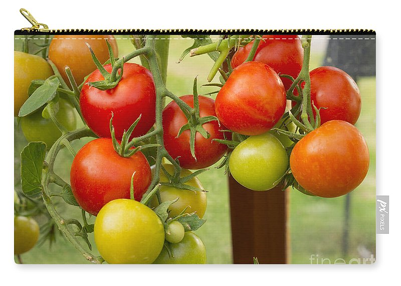 Tomato Carry-all Pouch featuring the photograph Tomatoes by Louise Heusinkveld