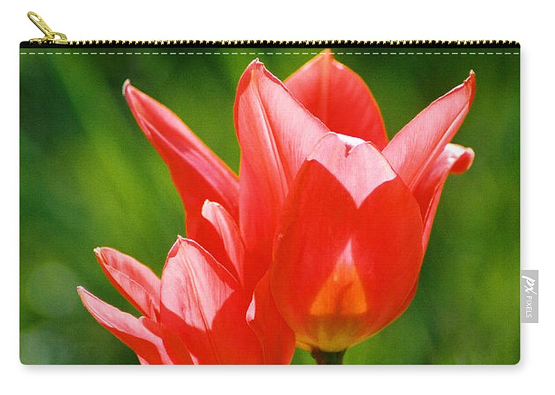 Flowers Carry-all Pouch featuring the photograph Toronto Tulip by Steve Karol