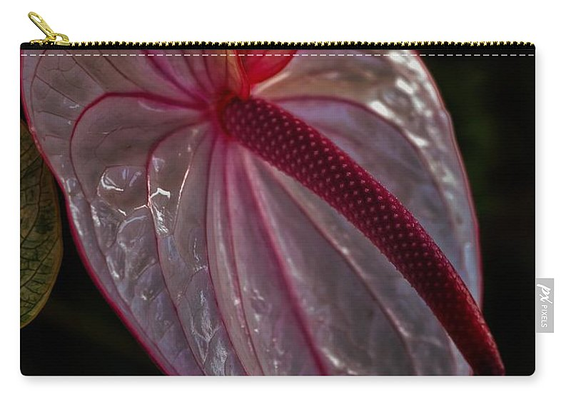 Anthurium Carry-all Pouch featuring the photograph Translucent Beauty by Heidi Fickinger