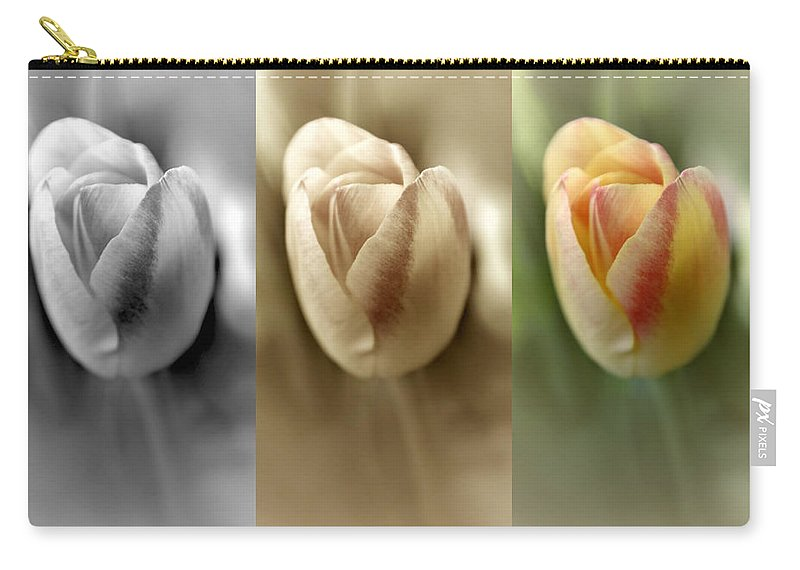 Tulips Carry-all Pouch featuring the photograph Tri Color Trio by Debbie Nobile