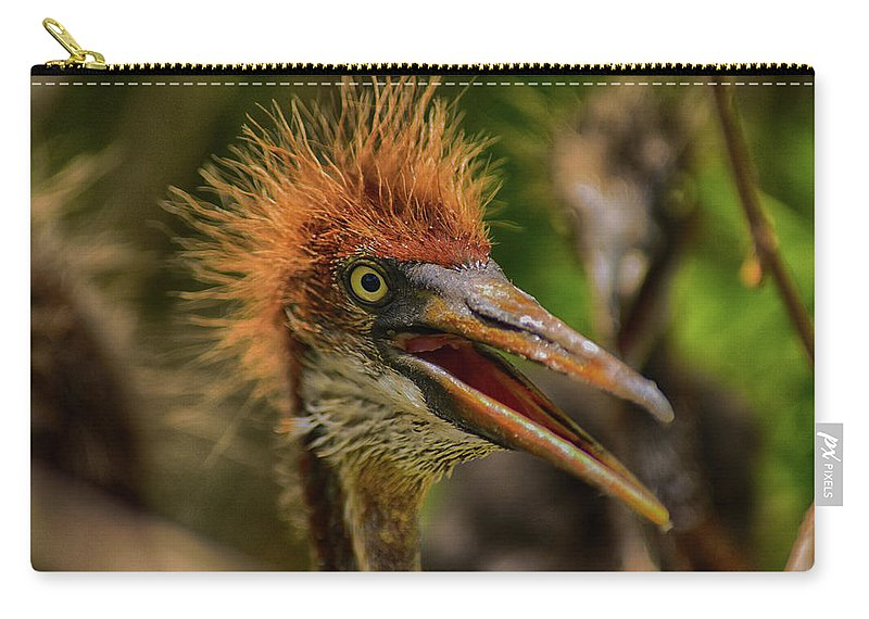 Heron Carry-all Pouch featuring the photograph Tri Colored Heron Chick by Dick Hudson