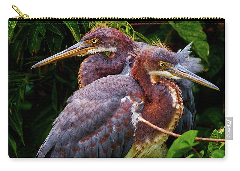 Birds Carry-all Pouch featuring the photograph Tricolored Siblings by Christopher Holmes