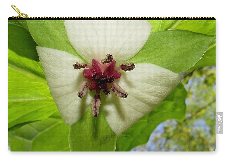 Trillium Wildflower Appalachian Wildflowers White Wildflowers Of North America Appalachian Flora Appalachian Botanical Biodiversity Natural Design Carry-all Pouch featuring the photograph Trillium Wildflower by Joshua Bales