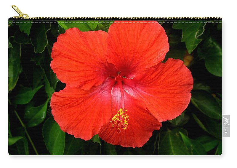 Hibiscus Carry-all Pouch featuring the photograph Trolling For Bees by Ian MacDonald