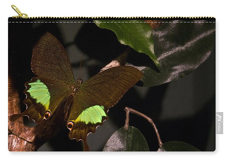 Tropical Carry-all Pouch featuring the photograph Tropical Buterfly by Douglas Barnett