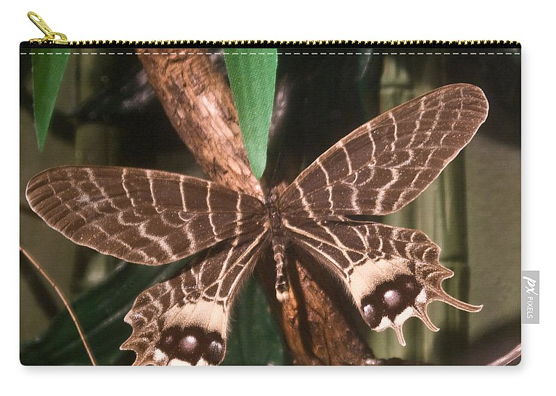 Butterfly Carry-all Pouch featuring the photograph Tropical Butterfly by Douglas Barnett